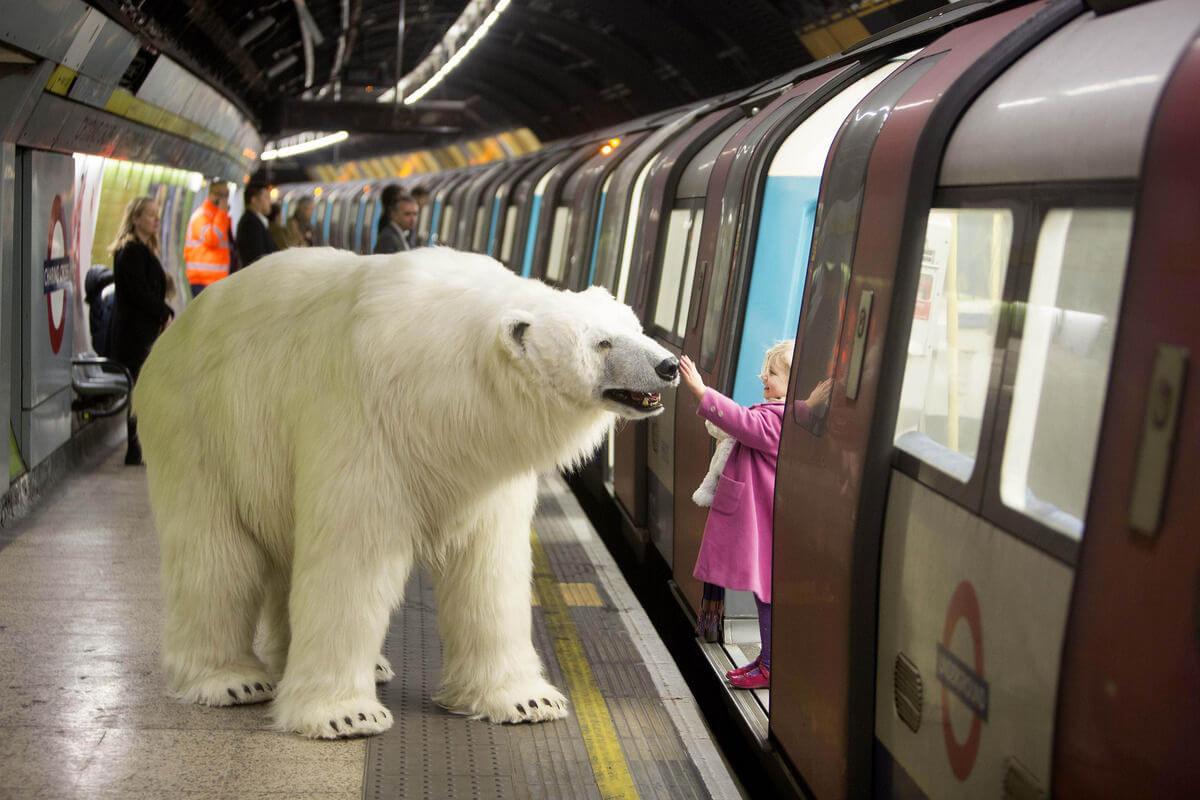 Polar Bear london 2015