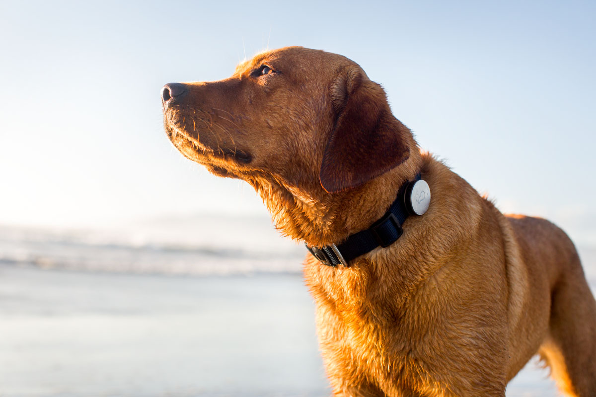 Dog wearable